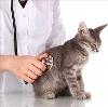 Ветеринарные клиники в Нефтекамске